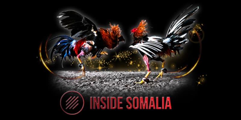Raih Banyak Keuntungan Bermain Sabung Ayam Online (1)